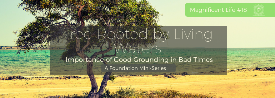 Tree Rooted by Living Waters